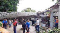 Pohon Tumbang yang Menimpa Rumah Warga, Toko dan Koperasi. Sumber foto: beritajatim.com