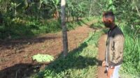 Lokasi Penemuan Mayat di Desa Jenggrong Ranuyoso Lumajang [Lintas Jatim]