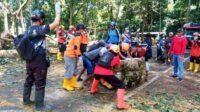 Petugas Melakukan Evakuasi Pohon Tumbang untuk Membuka Akses Jalan Gumitir